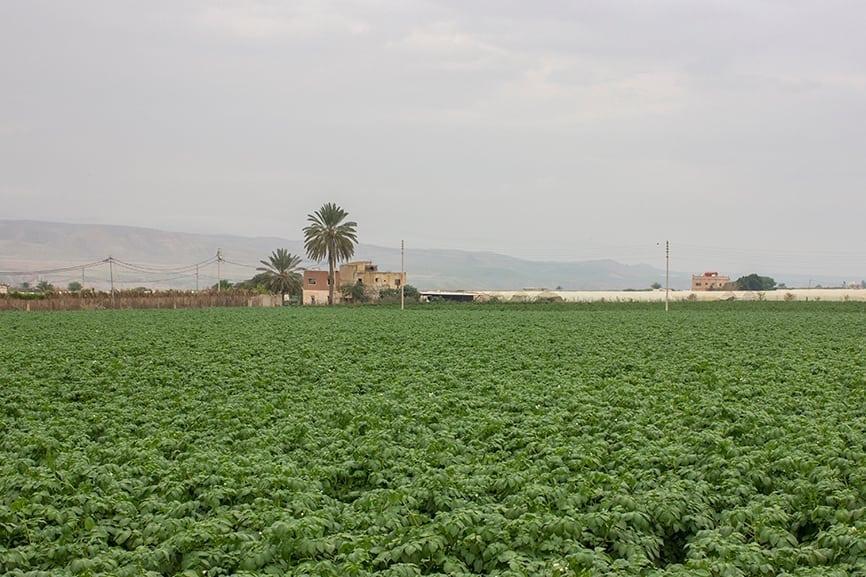 Dead Sea Production