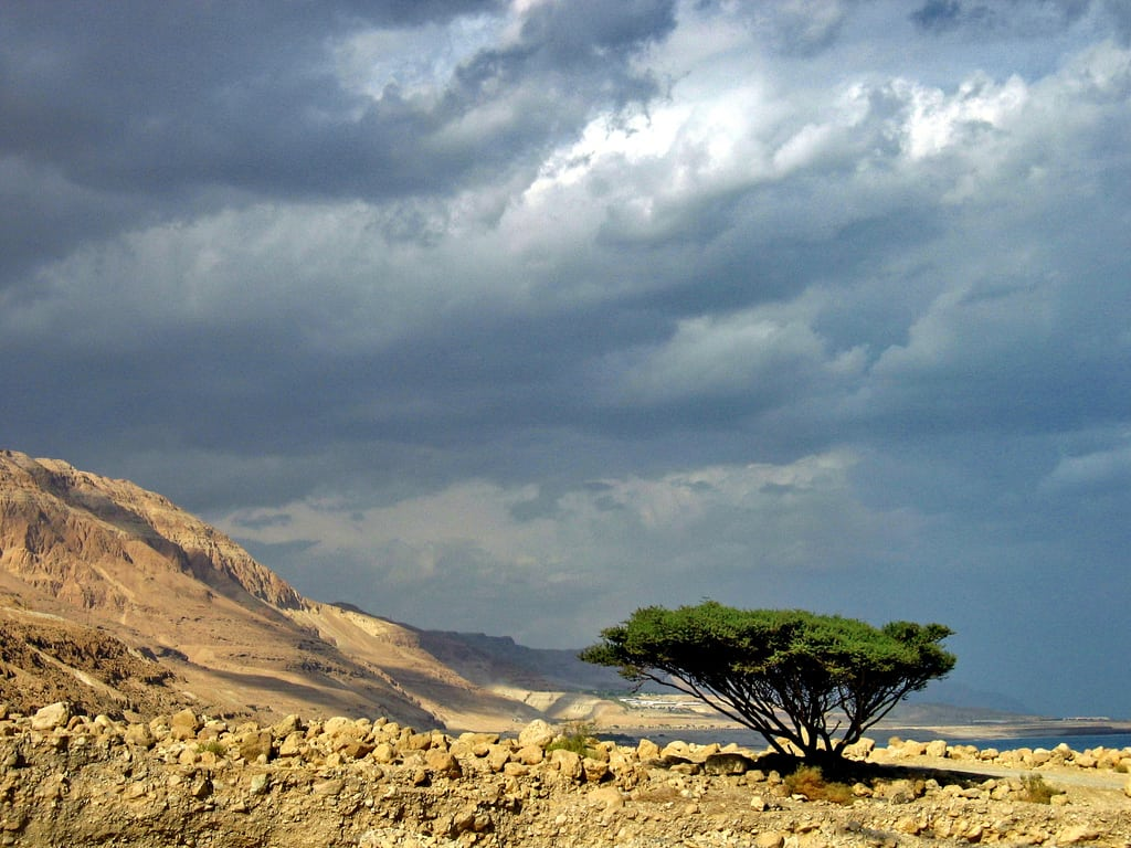 Dead Sea Tree