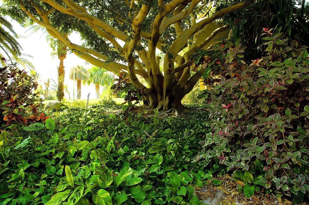Ein Gedi Gardens
