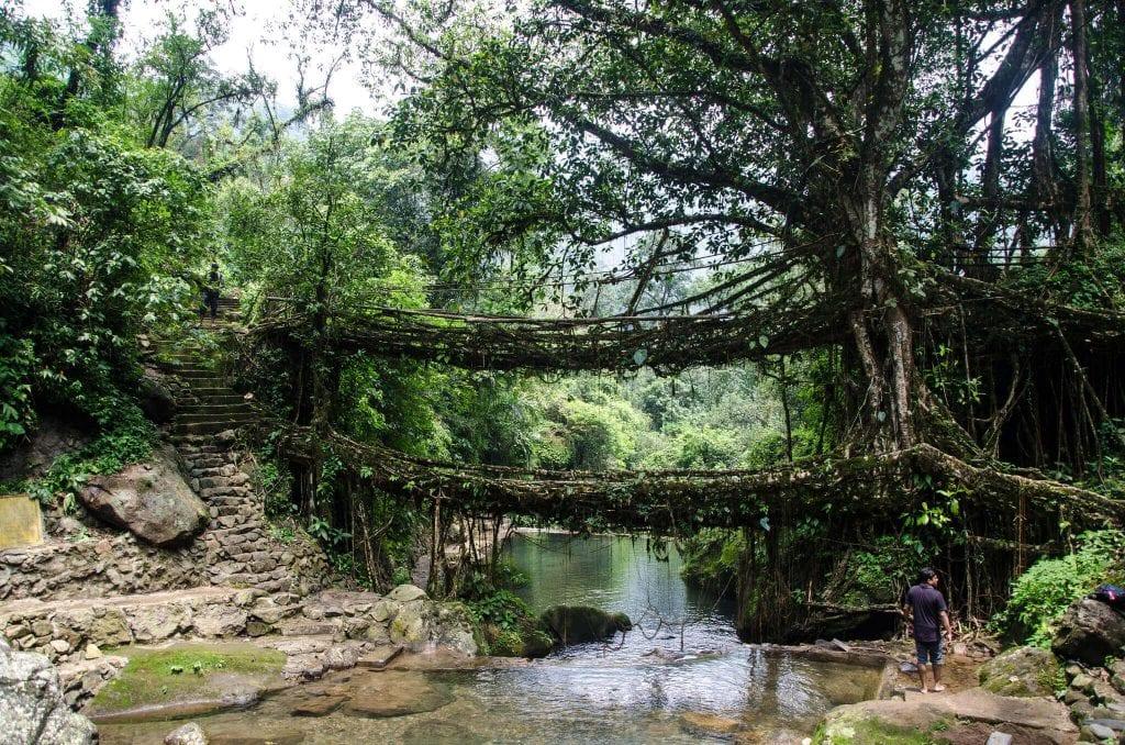 Living Bridges, India